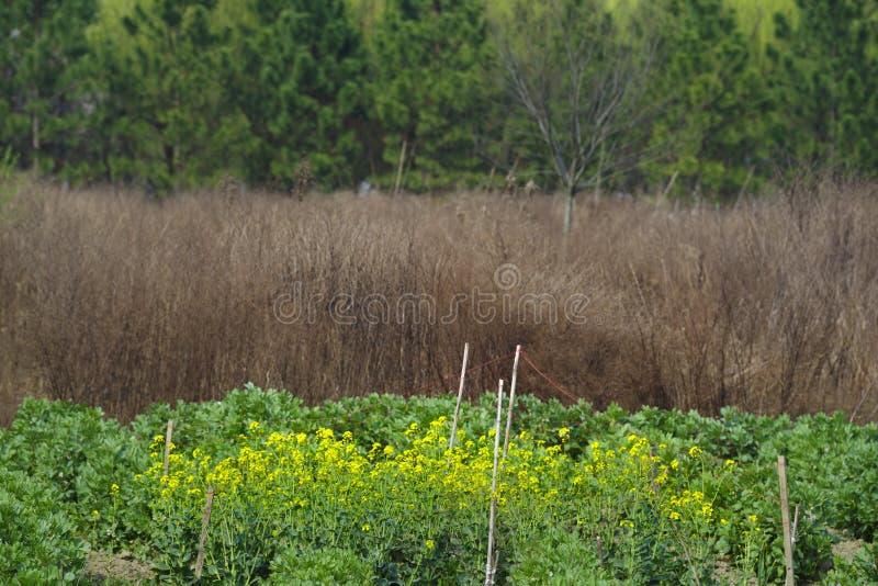 Différentes couleurs au printemps image stock