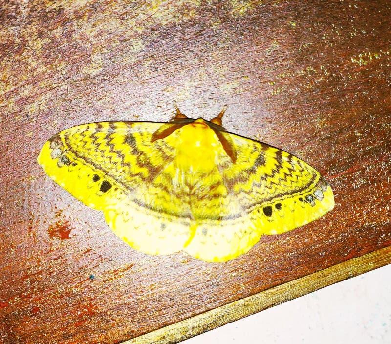 Différentes espèces de papillon sur le Tableau photographie stock