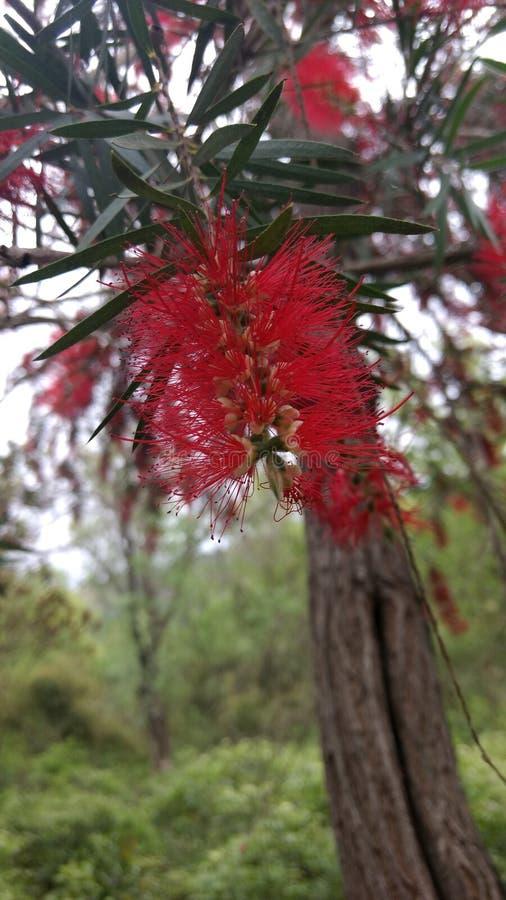 Différentes fleurs photographie stock