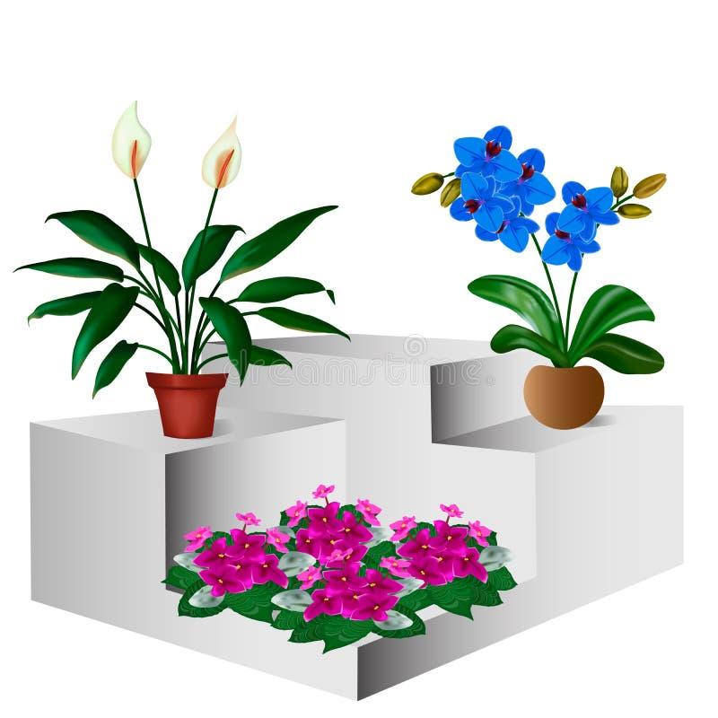 Différentes fleurs dans des pots à l'intérieur de la salle illustration libre de droits