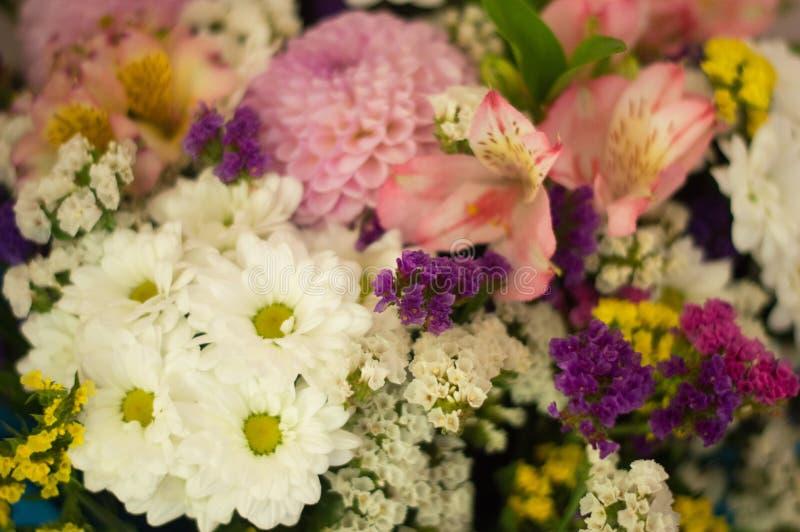 Différentes fleurs lumineuses photo stock