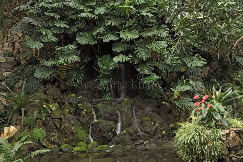 Différentes plantes tropicales dans la grande maison de paume du Palmengarten, Francfort Allemagne photo libre de droits