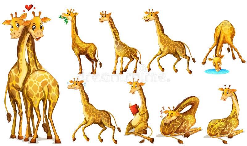 Différentes positions des girafes illustration stock
