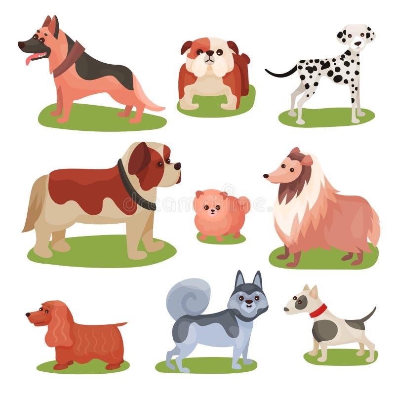Différentes races d'ensemble de chien, illustrations colorées de race d'animal d'animaux familiers illustration de vecteur