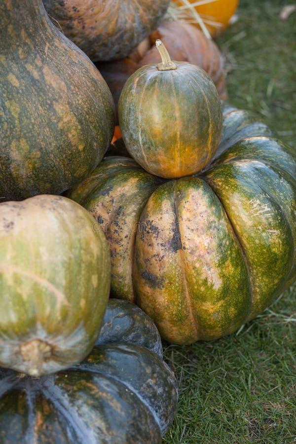 Différentes variétés de sirops et de potirons sur la paille Vue supérieure de légumes colorés Potirons oranges et verts à l'agric images stock