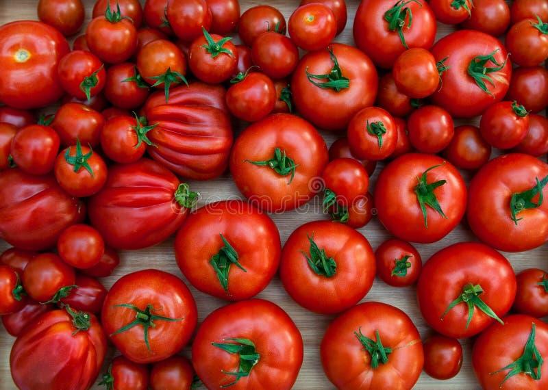 Différentes variétés de tomates photos libres de droits