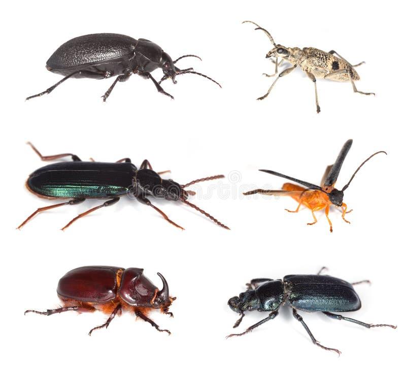 Différents coléoptères d'isolement sur le fond blanc. images libres de droits