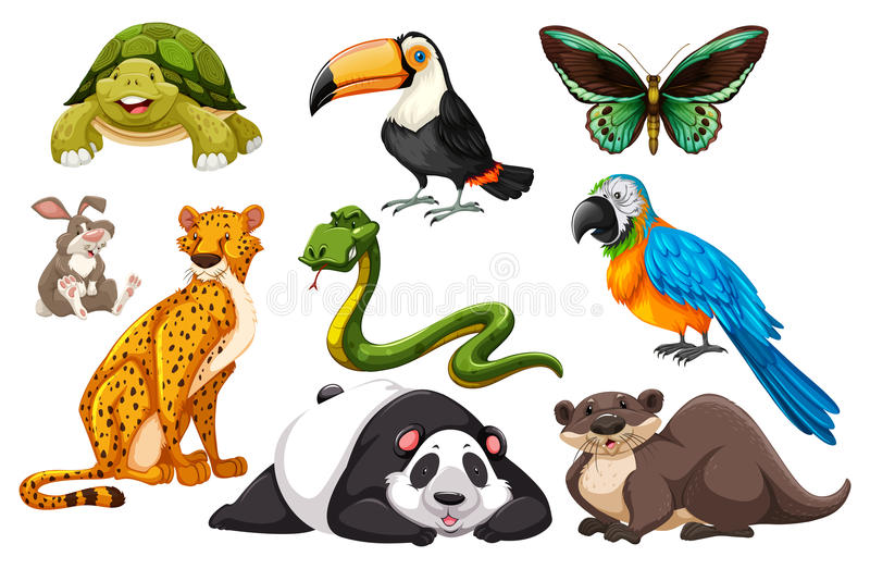 Différents genres d'animaux sauvages illustration stock