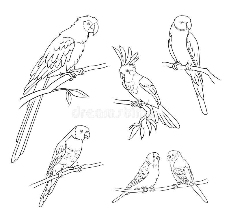 Différents perroquets dans les contours - illustration de vecteur illustration de vecteur