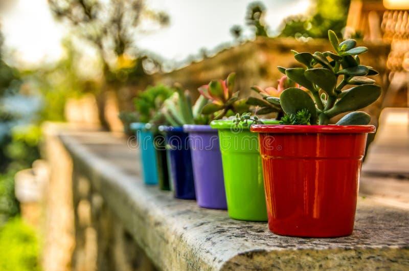 Différents pots de fleurs de colorfull comme décoration photo libre de droits