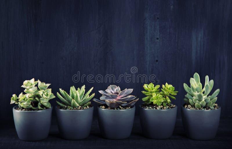 Différents succulents au-dessus du backgriund noir images stock