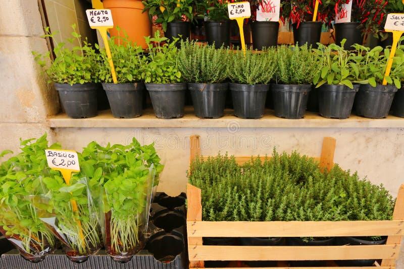 Différents types d'herbes fraîches dans des pots à vendre image stock