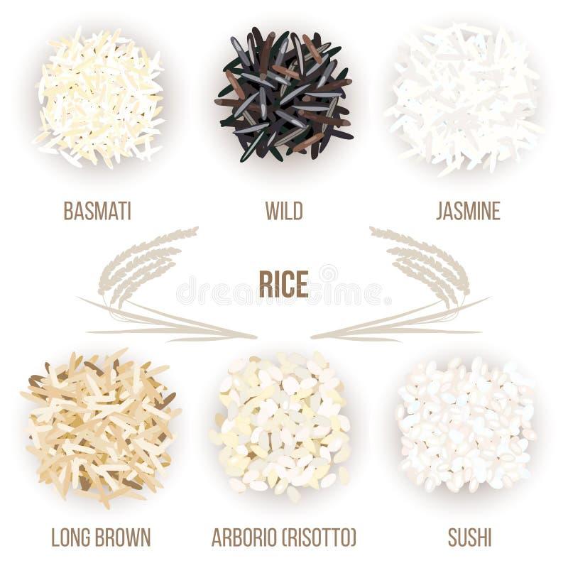 Différents types de grains de riz d'isolement sur le fond blanc Basmati, sauvage, jasmin, long brun, arborio, sushi illustration de vecteur