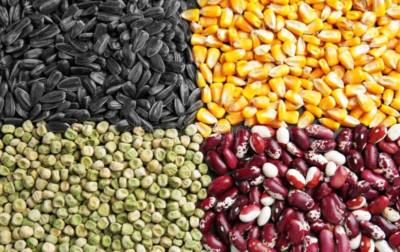 Différents types des céréales et de légumineuses, photographie stock libre de droits