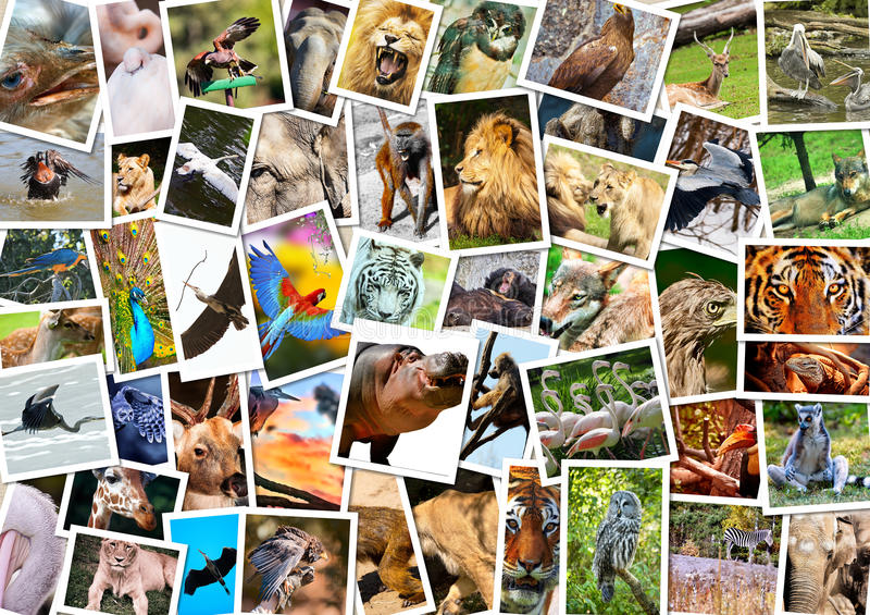 Different animals collage. On postcards royalty free stock photography