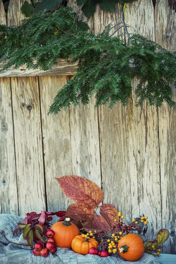 Different autumn fruits and berries. Bright orange mini pumpkins and knitted sweater. Calm autumn still life in the autumn garden. stock images