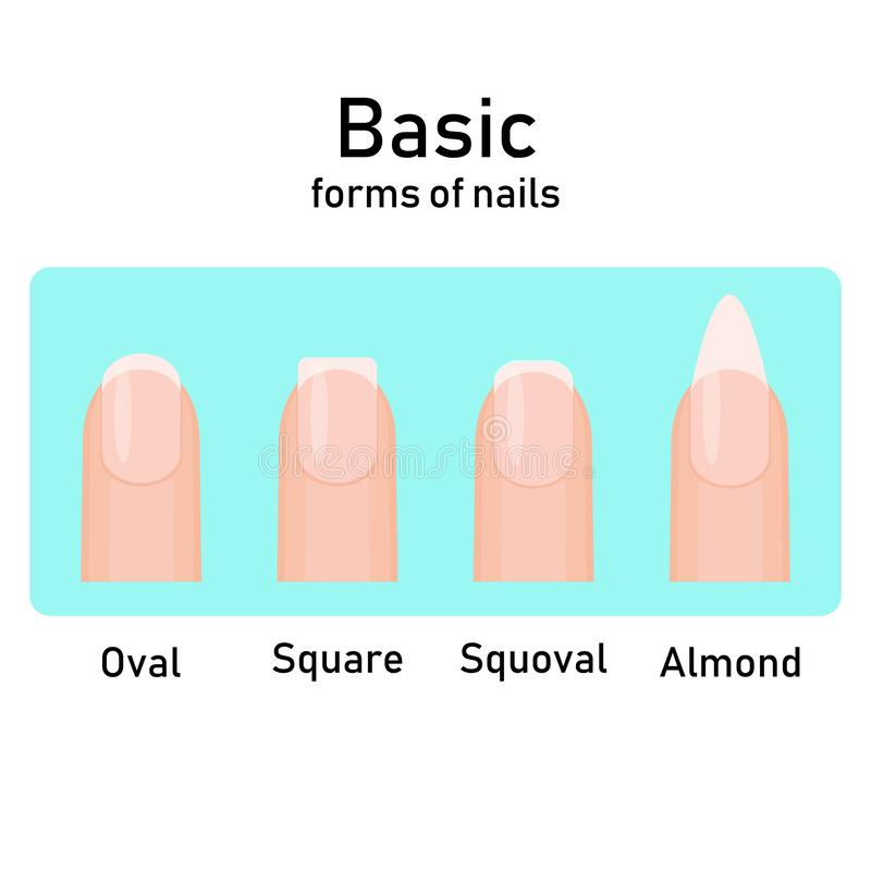Different basic fashion natural nail shapes. Set kinds forms of nails. Salon nails type trends. Vector illustration vector illustration