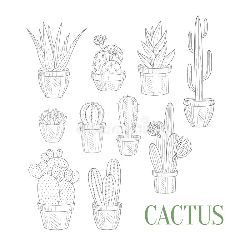 Different Cacti In Pots Hand Drawn Realistic Sketch stock illustration