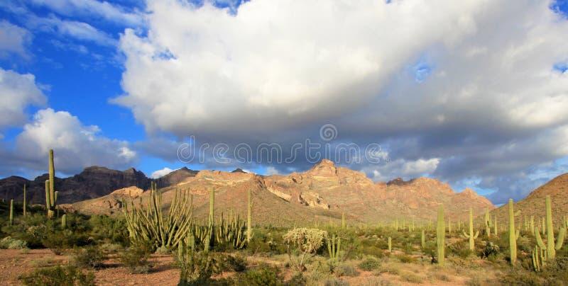 Different cactus species in Organ Pipe Cactus National Monument, Arizona, USA. Different cactus species in Organ Pipe Cactus National Monument, Ajo, Arizona, USA royalty free stock image