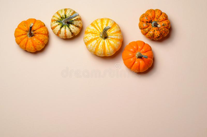 Different Colorful Pumpkins, Autumn Thanksgiving and Halloween Background stock images