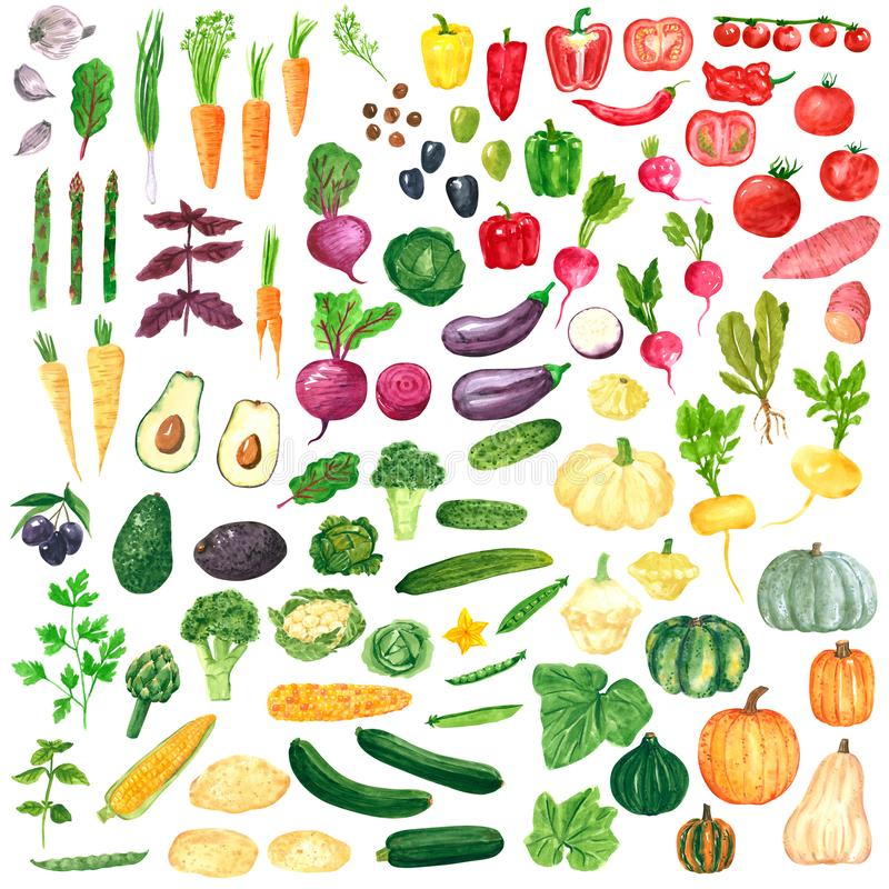 Different colorful vegetables clipart set, hand drawn watercolor illustration isolated on white. Halloween symbol royalty free illustration
