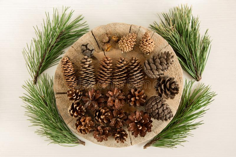Different cones of coniferous tree and four branches of pine on the white background, top view. royalty free stock photos