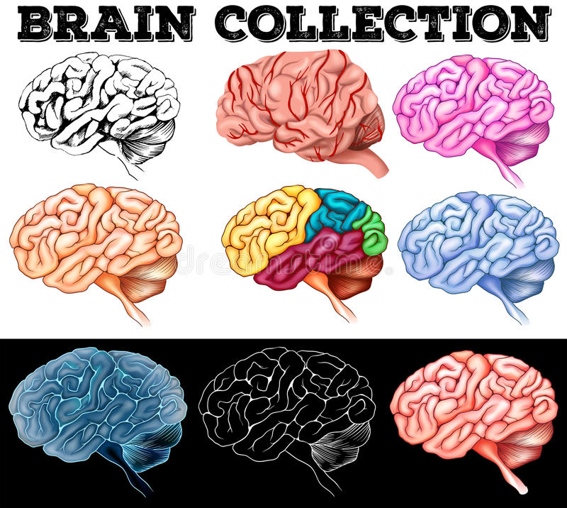 Different design of human brain royalty free illustration