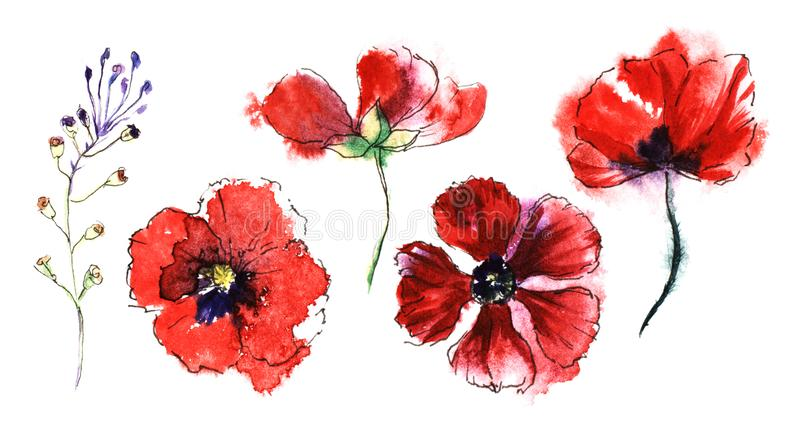 Different flower life stages of blood-red poopy flower from bud to blossom and wilt. Top and front view. Watercolor hand stock image