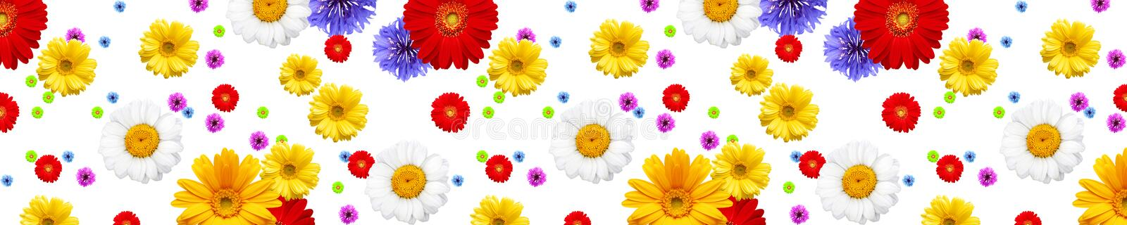 Different flowers royalty free stock images
