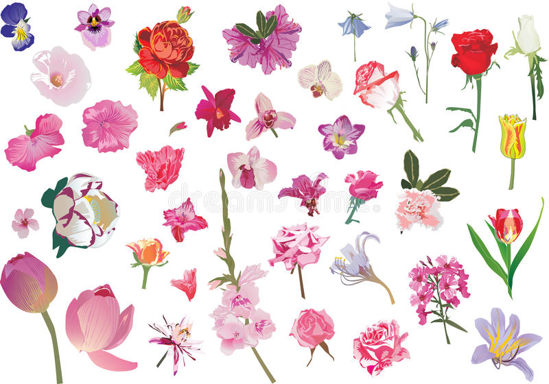 Different flowes collection isolated on white royalty free illustration