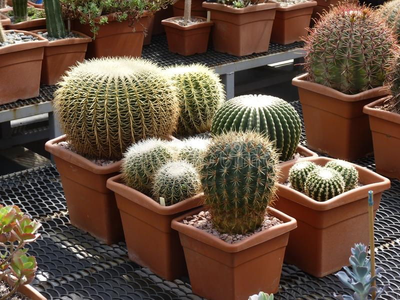 Different forms of cactuses in Botanical garden royalty free stock photo