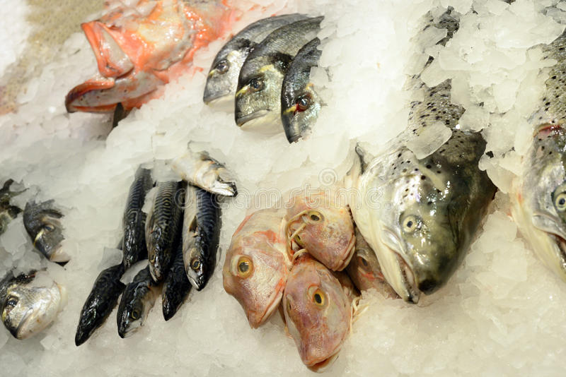 Different Fresh Seafood On Ice Stock Photos