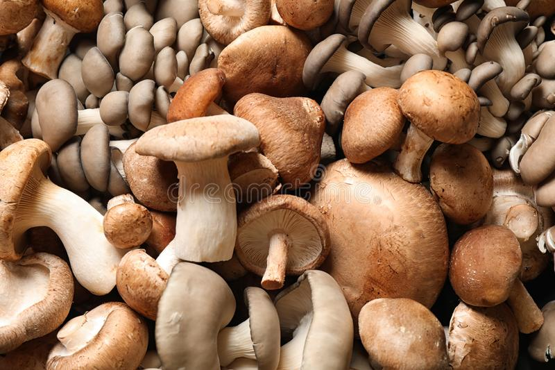 Different fresh wild mushrooms as background stock photo