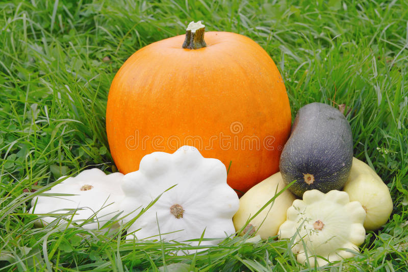 Different Gourd Family Vegetables Royalty Free Stock Images