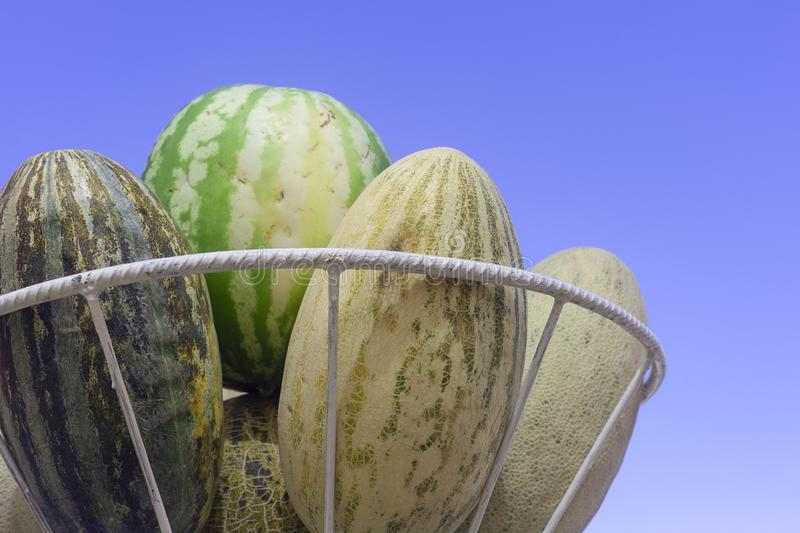 Group of fresh ripe yellow sweet melons and watermelons. Cantaloupe melons for sale in organic farm. Copy space. Different group of fresh ripe yellow sweet stock photography