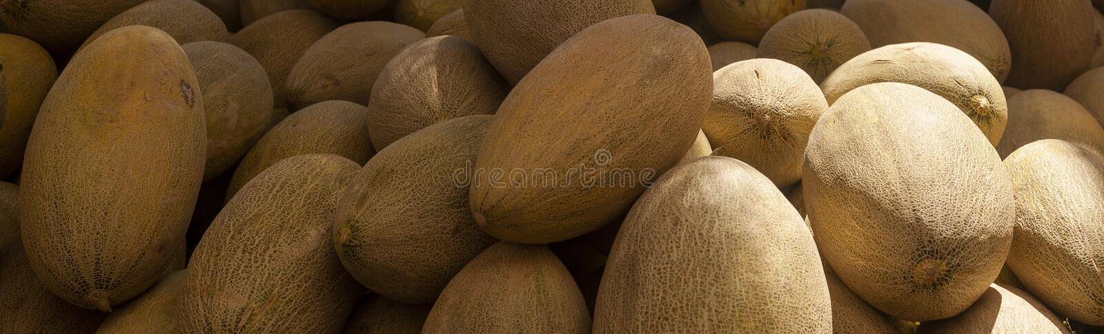 Group of fresh ripe yellow sweet melons. Cantaloupe melons for sale in organic farm. Different group of fresh ripe yellow sweet melons. Cantaloupe melons for stock image