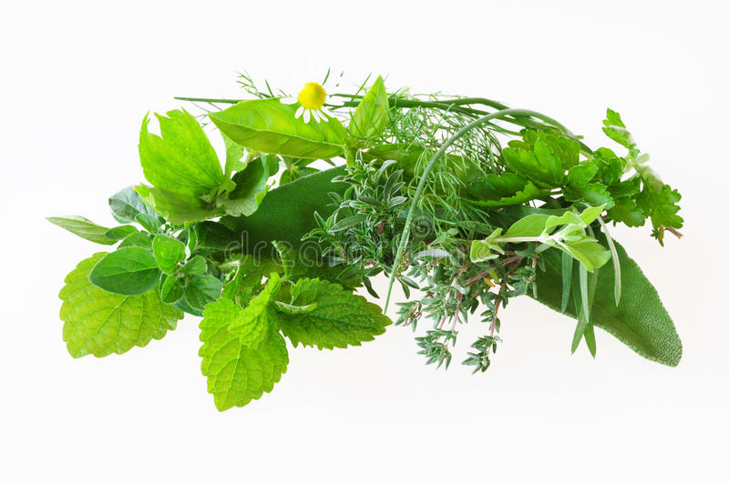 Download Different herbs stock photo. Image of leaves, thyme, lemon - 16265346