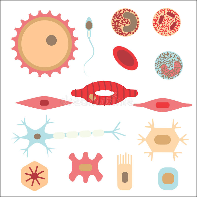 Different human cell types stock illustration
