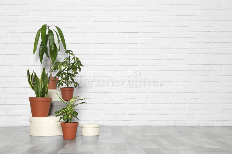 Different indoor plants at white brick wall. Trendy home interior decor. Different indoor plants at white brick wall, space for text. Trendy home interior decor royalty free stock photography