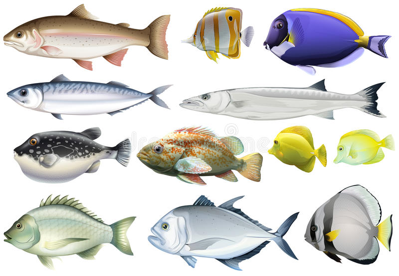 Different Kind Of Ocean Fish Stock Vector Illustration