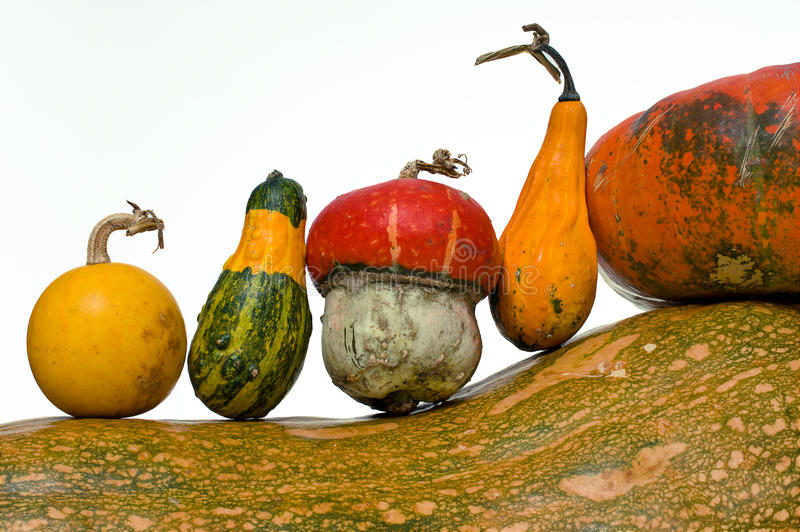 Different kind of pumpkins. Isolated on white background royalty free stock photography