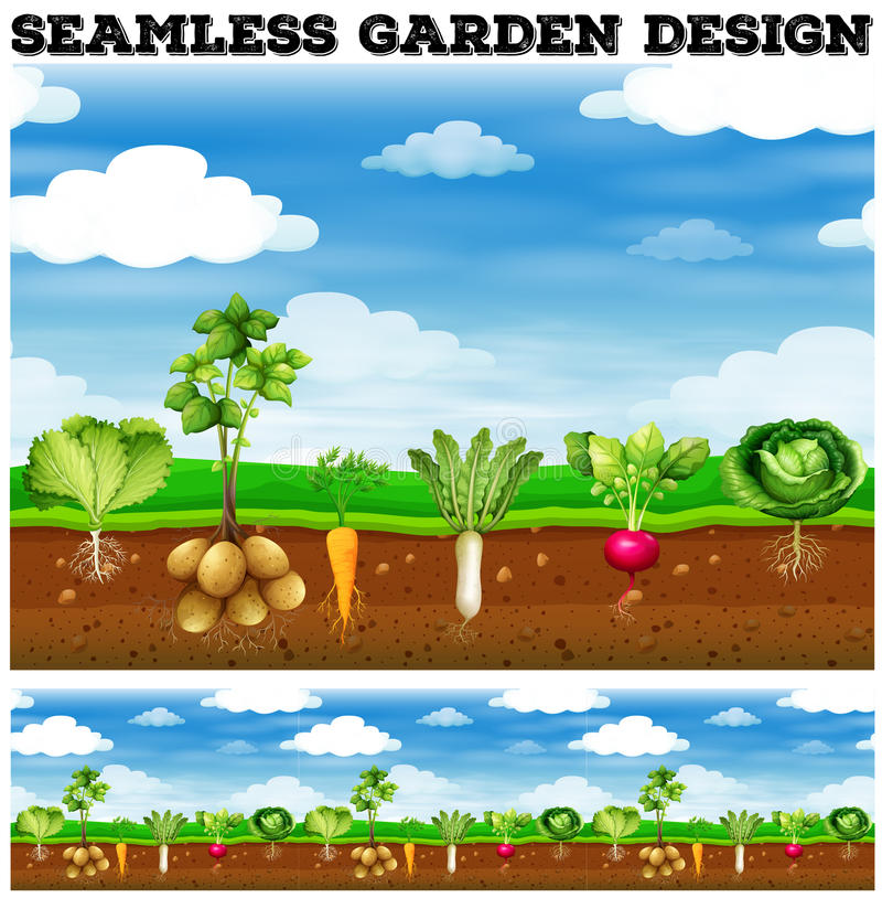 Different kind of vegetables in the garden royalty free illustration