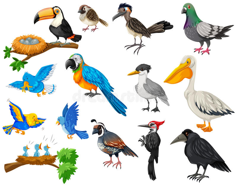 Different kinds of birds set royalty free illustration