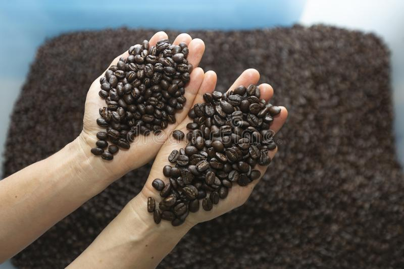 A different kinds of coffee beans on hand. stock photography