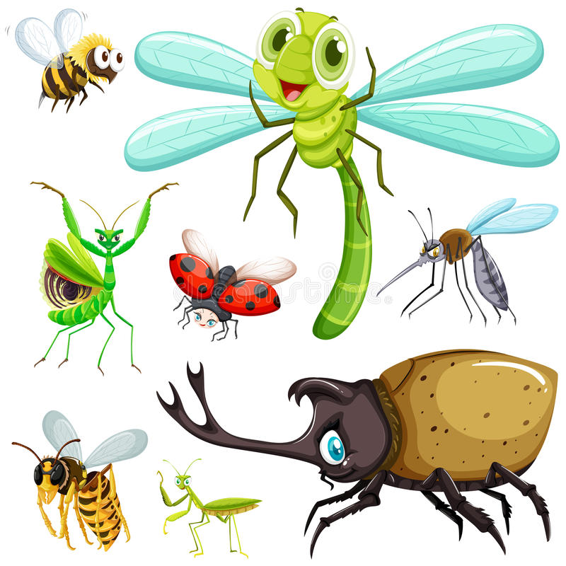 Different kinds of insects vector illustration