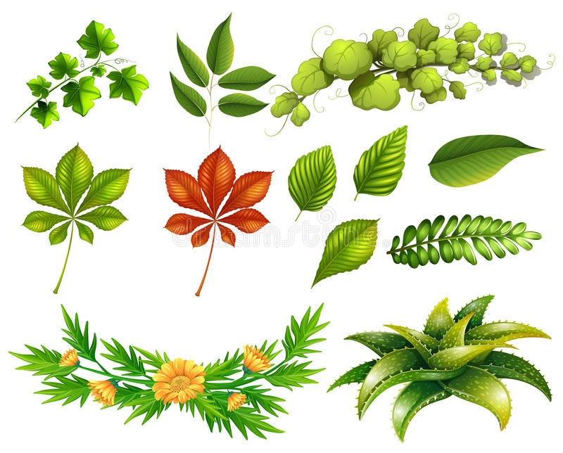 Different kinds of leaves stock illustration