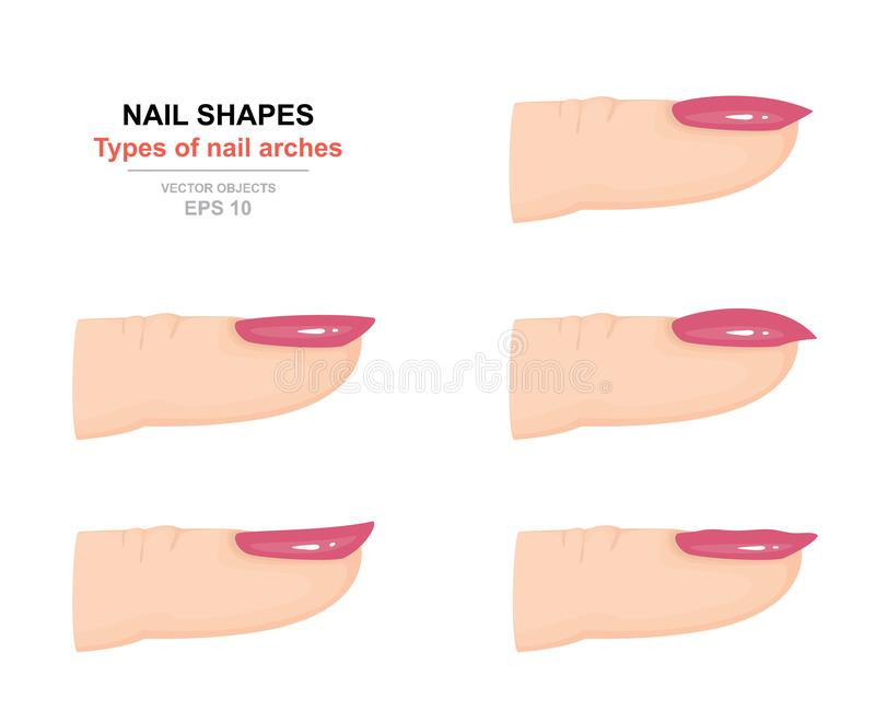 Different kinds of nail shapes. Types of nail arches. Science of human body. Side view. Vector royalty free illustration
