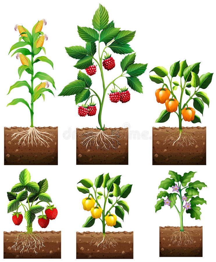 Different kinds of plant in garden vector illustration