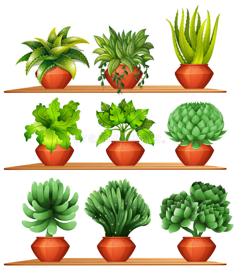 Different kinds of plants in clay pots vector illustration