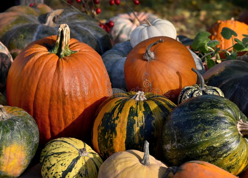 Different kinds of pumpkins stock images royalty free stock photos